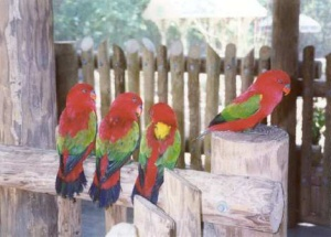 pet talk birds